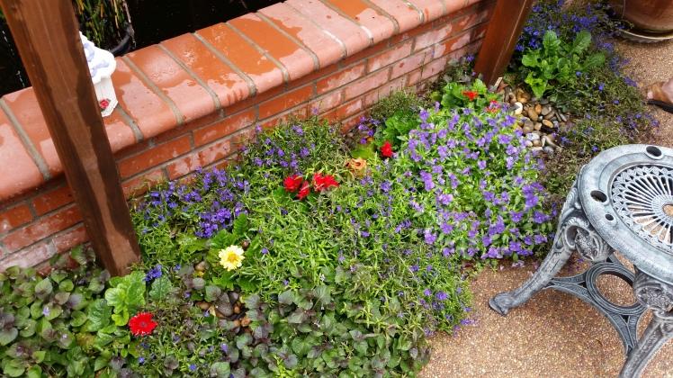 Mums beautiful flower border.